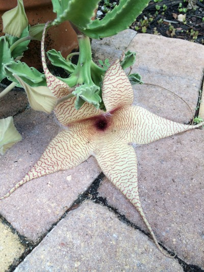 Isn't this one of the coolest flowers you've ever seen?