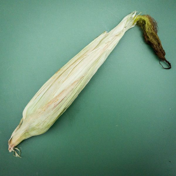 dried-out-corn-husk