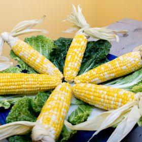 oven-roasted-corn-on-the-cob-husk-handles